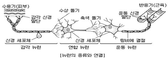 지방뇌세포.jpg